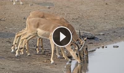 Zambia - Live Safari