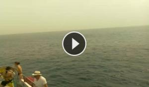 dolphins-whales-tenerife south-royal delfin-webcam canary islands-tenerife live